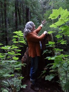 When we consider the trees as our sacred family, we can talk, listen, feel, touch and sing as one.