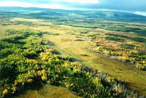 land-wetlands-t1_aerial