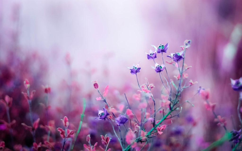 https://wallpapershome.com/nature/flowers/flowers-purple-4k-16035.html